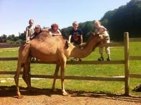 533ee4ee87b7a-kamel-kids