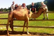 Kamel-Kids